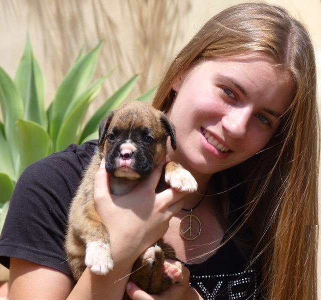 Boxer Puppies Now Available(
