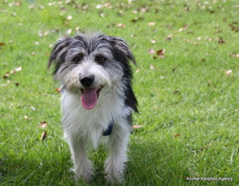 Small Male Shih Tzu x Skye Terrier Mix