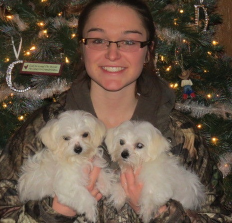 Maltese puppies available for Xmas and New Year